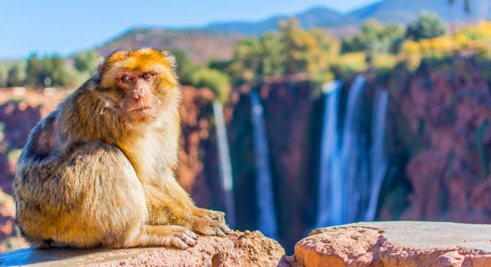 Full day private day tour to ouzoud waterfalls from marrakech